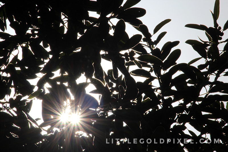 Weekly Photo Project • Pixels #15 •Little Gold Pixel