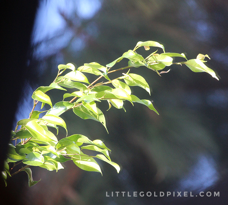 Weekly Photo Project • Pixels #7 • Little Gold Pixel
