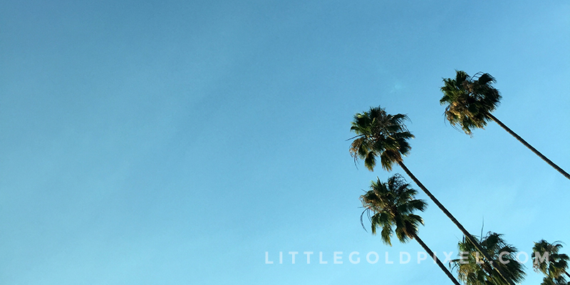 Weekly Photo Project • Pixels #24 • Little Gold Pixel