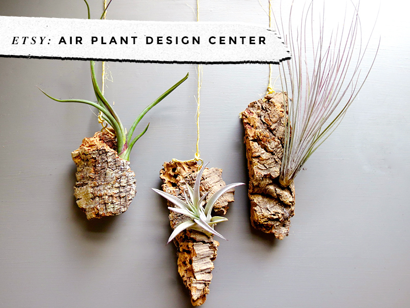 8 Awesome Air Plant Hangers • Little Gold Pixel • Air Plant Design Center