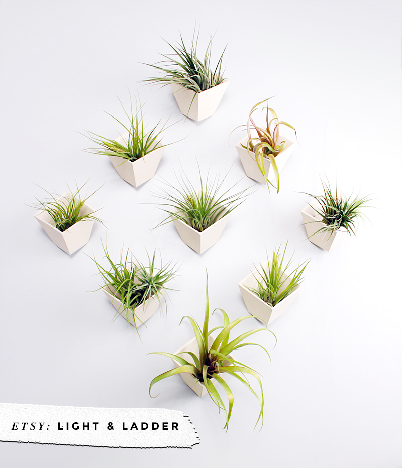 8 Awesome Air Plant Hangers • Little Gold Pixel • Light and Ladder